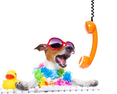 jack russell dog booking summer vacation holidays online using a pc computer keyboard, while shooting on the phone very loud ,wearing sunglasses and a flower chain , isolated on white background